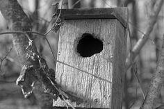 Day 51: Birdhouse