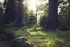 5 razones científicas para vivir más de cerca con la naturaleza