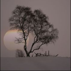 3.12.   The silence is Beauty, these snowcovered sceneries over the frail body of Mother Nature, like a Bride's Veil... This purple silent sunset with tremendous colours of whyteness. I feel like the hidden sun that is residing in my heart.  How it is so, yet earth just fell a sleep?