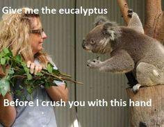 Give Me Back My Eucalyptus