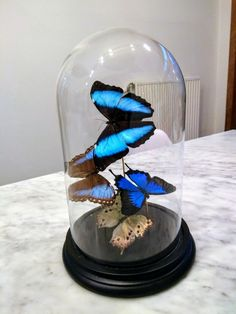 Blue butterflies in modern glass dome, made by INScT.  Don't like it when they call these bell jars antique or vintage