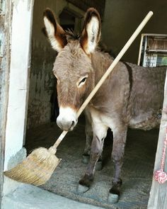 If you're lucky even the burros will help with the chores! (Nina Nüesch)