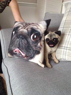 Pugs = drugs. I need it.