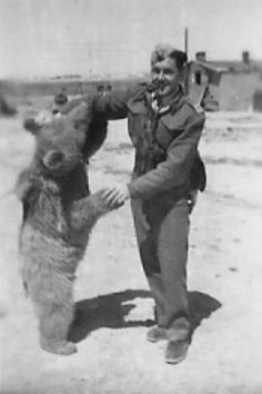 Wojtek, the Soldier Bear, c.1942