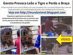 Mural Animal: Garoto Provoca Tigre e Perde o Braço