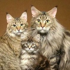 Oka the cat family portrait is too f-Inc adorable