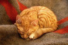 Sleep by jahat, via Flickr