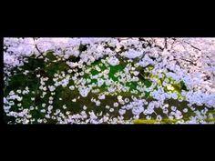 """▶ Skaldowie """"Sady w Obłokach"""" - YouTube"""