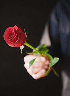 Love Rose Flower, Beautiful Rose Flowers, Blossom Flower, Flowers Gif, Flowers For You, Love Flowers, Flower Phone Wallpaper, Flower Wallpaper, Sweet Boys