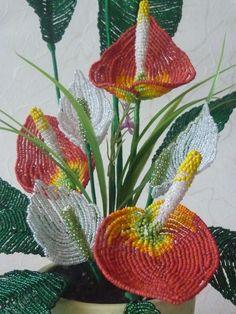 спатифиллум, антуриум, бисерный цветок