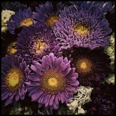 ~~ Purple Garden ~~