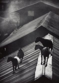 untitled, 1954, W. Eugene Smith