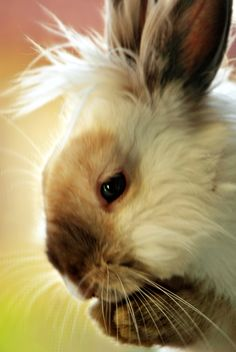 I made the mistake of watching the news...have to wipe it away with bunny images.
