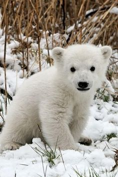 It's a baby polar bear!!!!!!!!!!!!