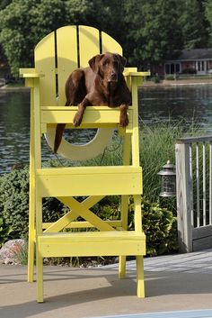 "Labs ""Labrador Lifeguard"" ---- [*Mocha* - Chocolate Labrador]~[Photograph by Lake Effect (Kathy Nobles) - July 29 - My husband's project (the chair, not the dog). I Love Dogs, Cute Dogs, Chocolate Labrador Retriever, Tier Fotos, My Animal, Animal Pics, Baby Dogs, Mellow Yellow, Mans Best Friend"