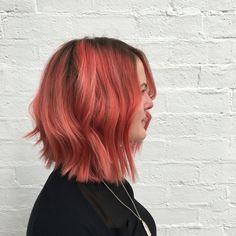 || Pink Salmon  ||