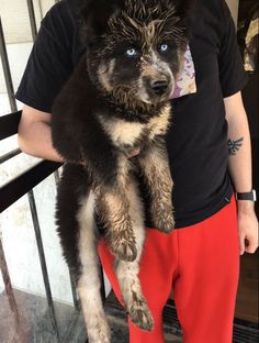And this big baby who really didn't mean to splash you. | 19 Muddy Puppies Who…
