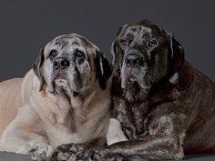 ► Cuidados para perros ancianos ◄ Cuida de ellos y agradece cada momento vivido a nuestro lado. http://www.planetacan.com/articulos-caninos/1569/cuidados-para-perros-ancianos