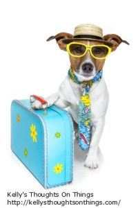 Be sure to pack these dog travel must-haves to happily and safely get your dog from point A to point B. This is all about dog travel. Jack Russell Terriers, Pet Boarding, Dog Bag, Dog Safety, Safety Tips, Dog Travel, Travel Tips, Mans Best Friend, Dog Owners
