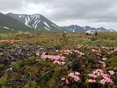 Tundra flowers by bmvd