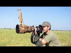 Photos and Video of Meerkats Climbing All Over a Photographer and His Gear