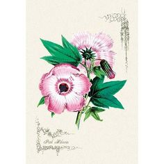 """Buyenlarge Pink Hibiscus Painting Print Size: 42"""" H x 28"""" W x 1.5"""" D"""