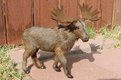 Furry Animal Moose Head Moosehead Wall Mount Replica by Kadaland