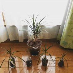 12093680 520545984760940 1961636189 n Plants, Plant, Planets