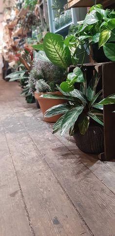 KRAFT Fleurs & Jouets 278 cours de la somme, 33800 BORDEAUX Bordeaux, Stores, In This Moment, Boutique, This Or That Questions, Plants, Toys, Bordeaux Wine, Plant