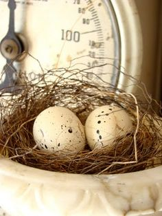 Scale ♥ speckled eggs...nest