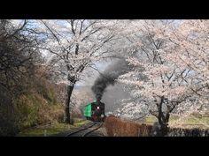 桜満開の「やながわ希望の森公園」 SLさくら1号 2013-4-13 - YouTube