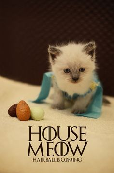 Tiny Kittens Dressed As Fantasy Characters The. - Tiny Kittens Dressed As Fantasy Characters The Lord of the Rings, Star Wars, Doctor Who, and Game of Thrones all get the tiny, cute kitteh treatment. Cute Kittens, Kittens Playing, Cats And Kittens, Kitty Cats, Crazy Cat Lady, Crazy Cats, Khaleesi Halloween Costume, Halloween Costumes, Kittens In Costumes