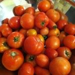 All kinds of tomato
