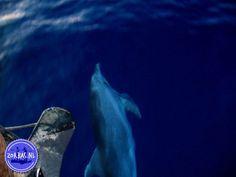Excursies op Kreta bezienswaardigheden en activiteiten in Griekenland dolfijn op Kreta Whale, Whales