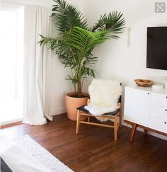 Office/Guest Room/Gym:  bright whites with wood accents and tropical green plants; tropical zen spa vibe