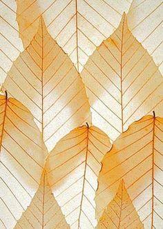 Leaves on a lighttable