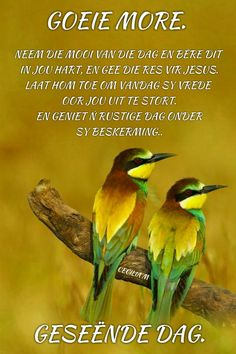 Lekker Dag, Afrikaanse Quotes, Goeie Nag, Goeie More, Good Morning Wishes, Qoutes, Words, Quotations, Quotes