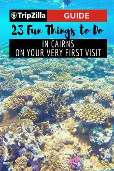 From visiting the Great Barrier Reef to feeding a humongous crocodile to cuddling a koala, there's no lack of fun things to do in Cairns! Coast Australia, Visit Australia, Western Australia, Australia Travel, Australia 2018, Australia Holidays, Victoria Australia, South Australia, Sydney