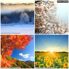 Our love for all seasons! View more here http://bit.ly/1v6XdVO #fourseasons #seasons #nature