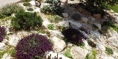White rock garden with green and purple colors- hófehé sziklakert zöld és lila növényekkel