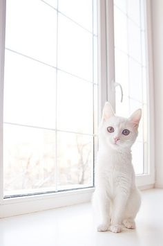 I've always wanted a white kitten to name Pearl.