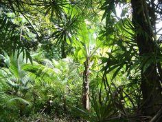 Ile de La Réunion - Forêt tropicale