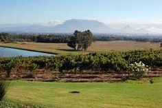 de Grendel vineyards with Table Mountain in the distance