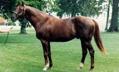 Alydar's Final Hours | Features | BloodHorse.com who was murdered some say for the insurance money , this poor horse went threw hell , trained by a moron and then slain , HE WAS A CHAMPION