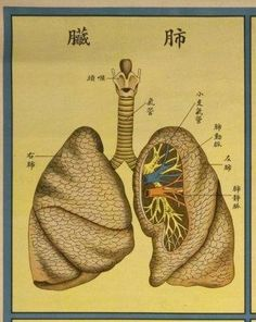 chinese herbal remedies for copd | Show Chinese Herbs Helpful for COPD Conditions chinese herbs for COPD ...    http://www.omegaxl.com/blog/copd-omega-xl-helps/?GHW_affid=MLIFE