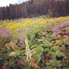 rastline - sedmera jezera