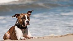 Electronic Dog Training Collars: How to Use Them Safely | Top Dog Tips