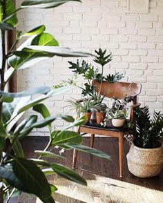 Best Plant Instagram Accounts To Follow Fern Shop Cincinnati