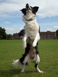 Dancing Dog by meg price, via Flickr