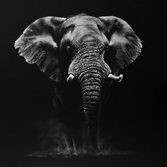 """2,213 Likes, 47 Comments - Richard Symonds Artist (@richardsymondsartist) on Instagram: """"A white on black pencil drawing taken from an Addo Elephant in South Africa. Addo is an amazing…"""""""